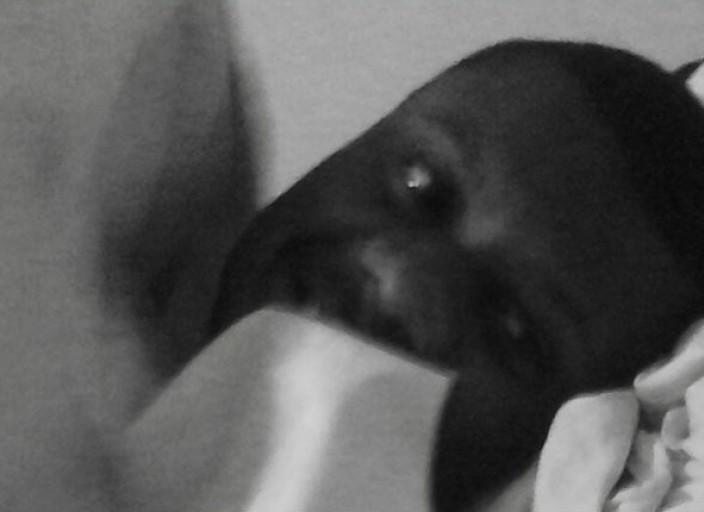 jeune black de 27 ans masseur cherche  une femme p.